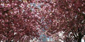 Meetings, Events oder Feiern im Maritim Hotel Magdeburg
