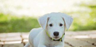 """Reisen mit Hund: Neues Buchungsportal """"Travel with Dogs"""""""