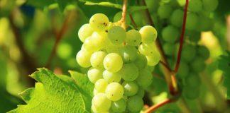 Biowein aus Frankreich