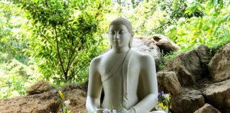 Mit Lotus Travel die Schönheit Sri Lankas entdecken