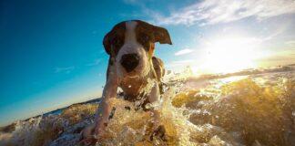 Das Hundehotel im Norden: Pharisäerhof feiert Geburstag