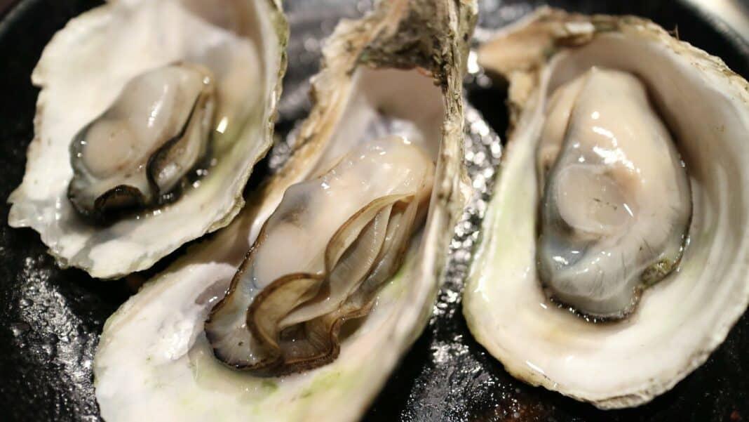 Wilde Austern aus Amrum: Aus dem Wattenmeer auf den Teller