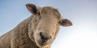 Biologisch! Drei ausgezeichnete Bio-Bauernhöfe in Bayern