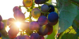 Frühlingserwachen mit Gaumen und Seele und Asavi-Weinsalzen