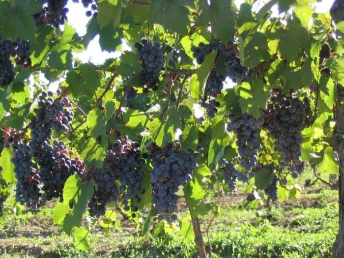 Weinagentur Gevenich