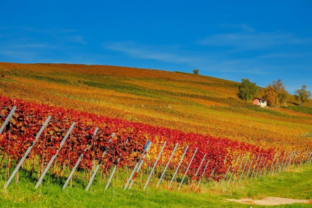 Zusammenarbeit im Weinbau zwischen Rheinland-Pfalz und Burgund