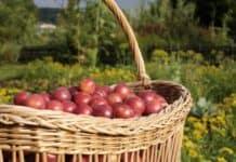 Regionale Lebensmittel leisten Beitrag zum Klimaschutz
