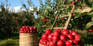 Steht Bio drauf, ist Bio drin: 2014 wurden 700 Lebensmittel untersucht