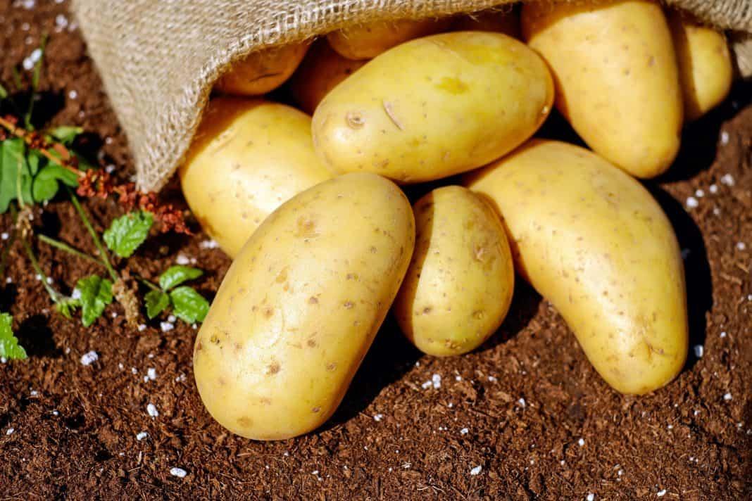 Kartoffel- und Gemüsestandort MV gestärkt – Förderbescheid übergeben