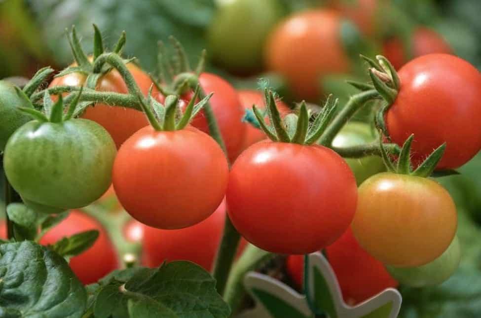 Die Entscheidung des Patentamtes ist ein riesiger Skandal und bedroht Landwirte, Pflanzenzüchter und Verbraucherinnen und Verbraucher.