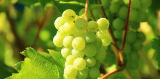 """Weinüberwachung: """"Kontrollen dienen dem Schutz der redlichen Winzer"""""""