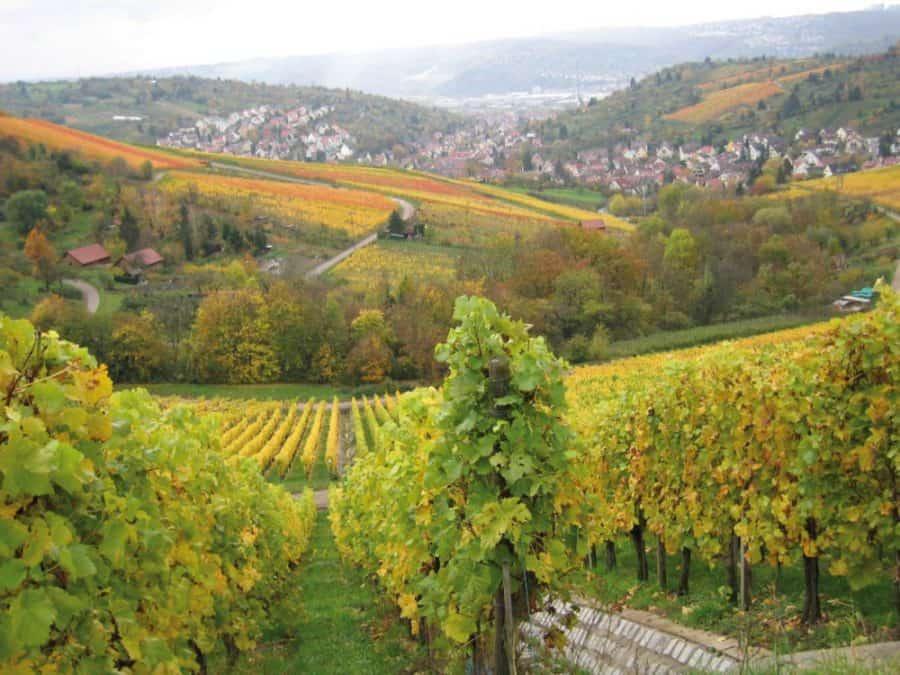 Weinwege Württemberg Stuttgart