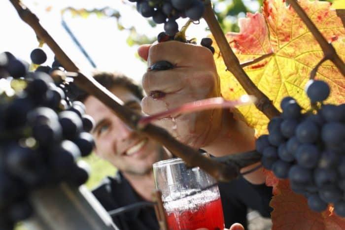 Württemberger Wein-Kultur-Festival 2016