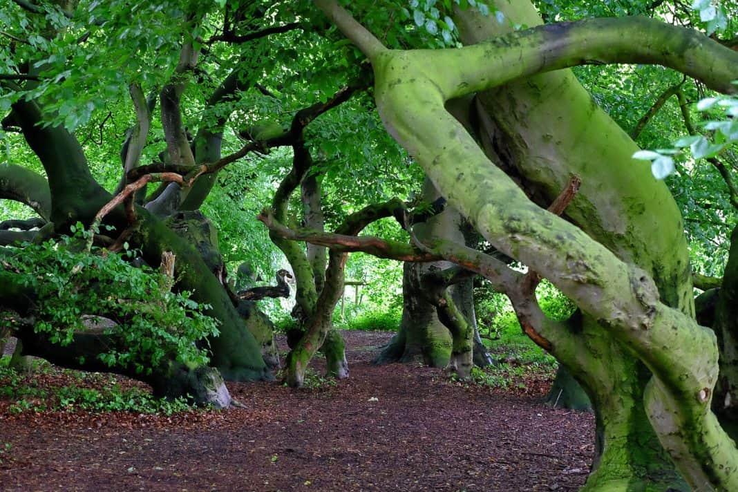 UNESCO Welterbe Alte Buchenwälder in Sassnitz