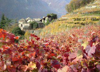 Am 26. November findet im Aostatal die Siegerehrung der 25. Mondial Vins Extrêmes statt.