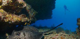 Lily Beach Pures Tauchvergnügen im indischen Ozean erleben