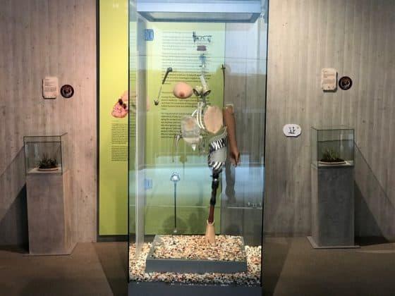 Moderne Welt Neanderthal Museum
