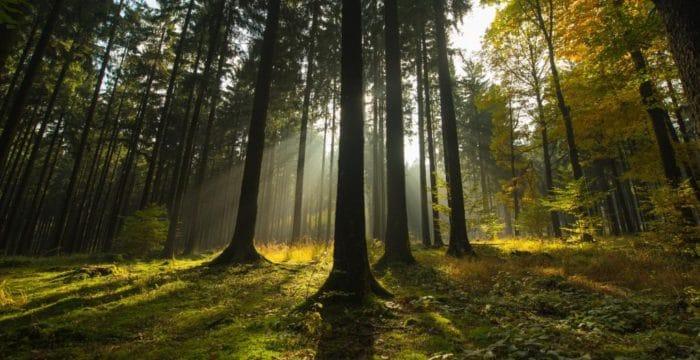 Naturkurse und Wildnis-Seminare mit dem Bear Grylls des Spessarts .