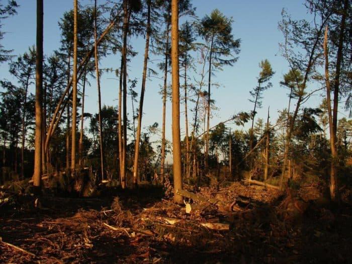 Weserbergland-Weg für Wanderer wieder komplett begehbar