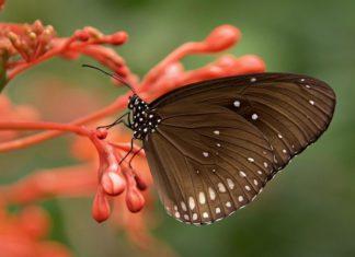 Die Tage der offenen Schmetterlingswiese am 17.-19. August 2018.