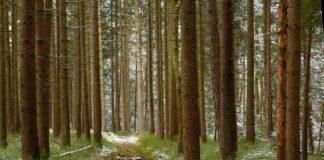 Grenzenloser Wanderherbst am Goldsteig: Routen ohne Grenzen.