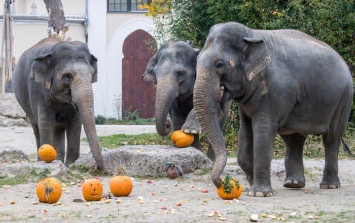 Halloween für Groß und Klein im Tierpark Hellabrunn