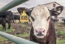 Staatliches Tierwohl-Label braucht anderes Konzept