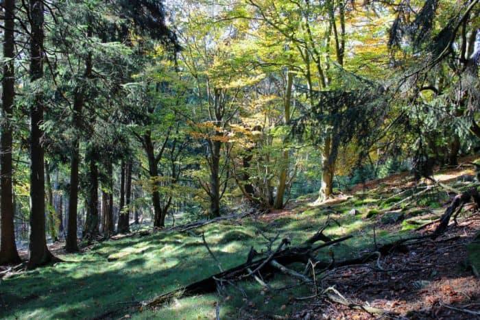 Im Dienste der Natur: Mit der Rangerin durch den Naturpark Taunus