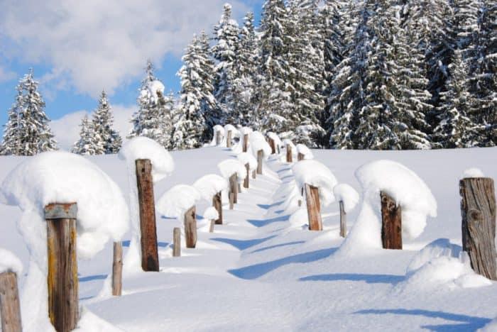 Pillerseetal: Auf Spurensuche im Winterwald um Fieberbrunn