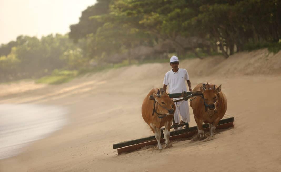 InterContinental Bali Resort: Strandbegegnungen der besonderen Art