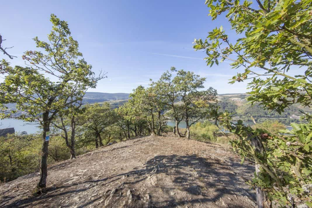 """Wanderweg """"Rhein-Wisper-Glück"""" mit Höchstbewertung"""
