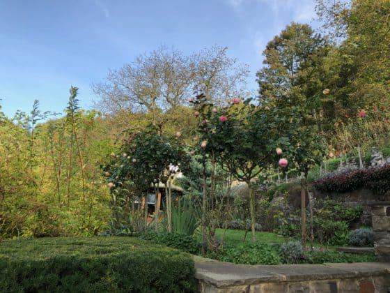 Adenauers Rosengarten, im Hintergrund der Pavillon
