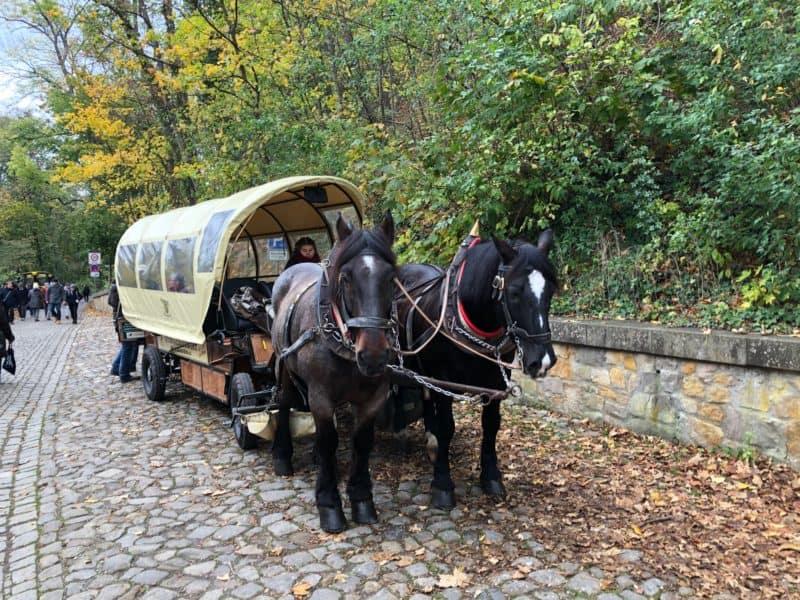 Mit der Pferdekutsche zum Schloss Wernigerode