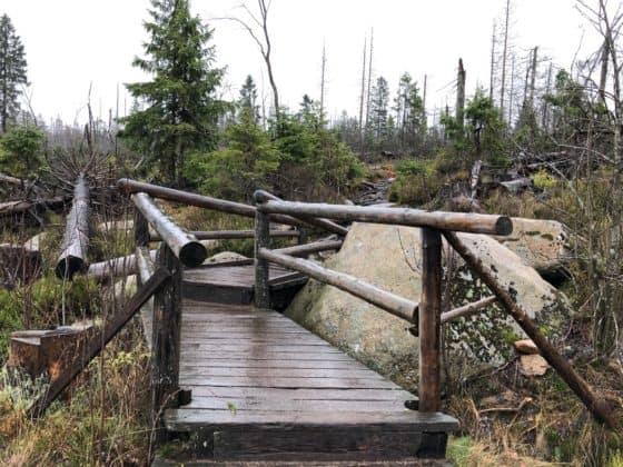Wanderweg rum um den Oderteich