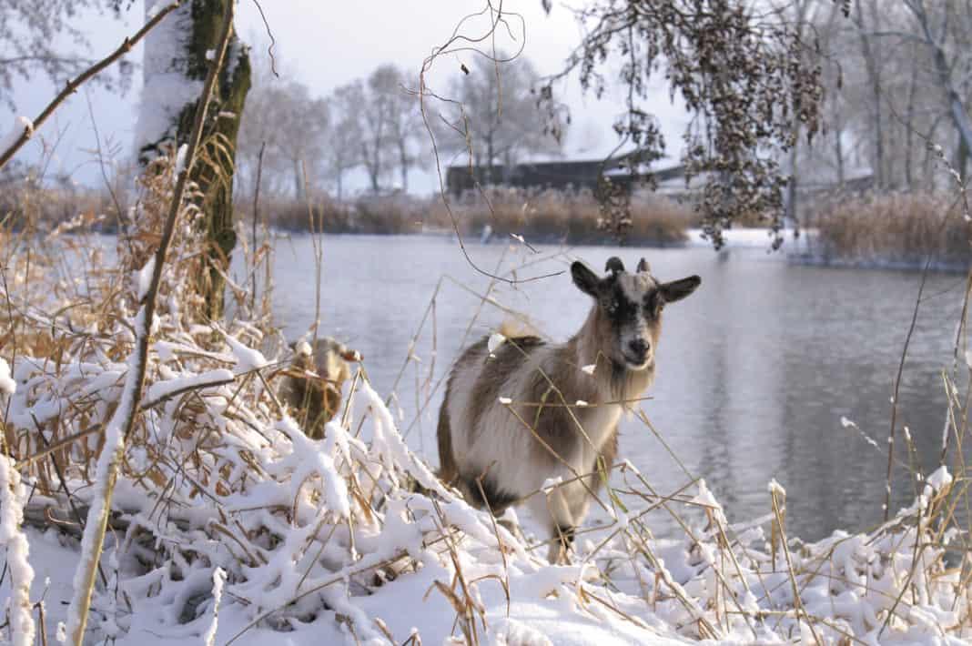 Winterliches Brandenburg: Die Prignitz lockt mit exklusiven Angeboten