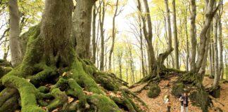 Wandern von Hillesheim nach Schalkenmehren