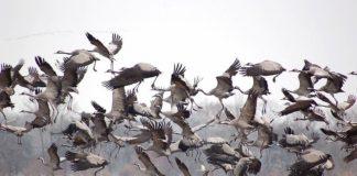 Prignitz: Herbstzauber trifft Vogelzug im Drehkreuz für Zugvögel