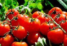 Öko-Lebensmittelhersteller zwischen Bio-Boom und polit. Rückwärtsrolle