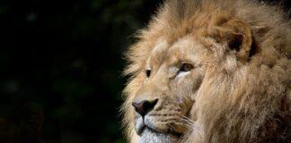 Ranking: Welches sind die beliebtesten Zoos in Deutschland?