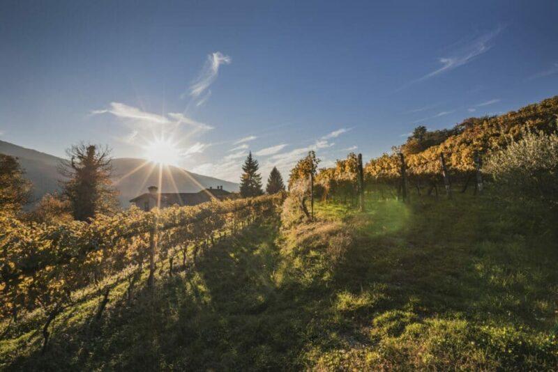 """In den Weinbergen der Südschweizer Malcantone-Region können Urlauber in einem von sieben Tessiner """"Million Stars Hotels"""" einchecken. Bild: Alberto Vicari"""