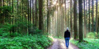 Wandern im Schwarzwald: Deutschlands größter Naturpark