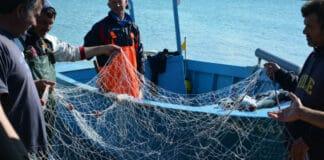 Tag der Fische: Nur Klimaschutz sichert künftig den Genuss von Fisch